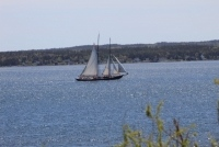Bluenose II - photo credit to Trudy Trites